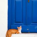 Cat_before_the_door20x30